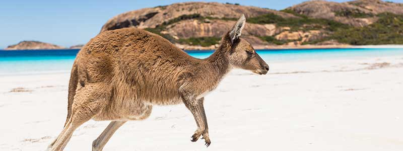 Voyage Australie : Kangaroo Island